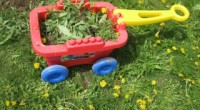Wagon of Weeds